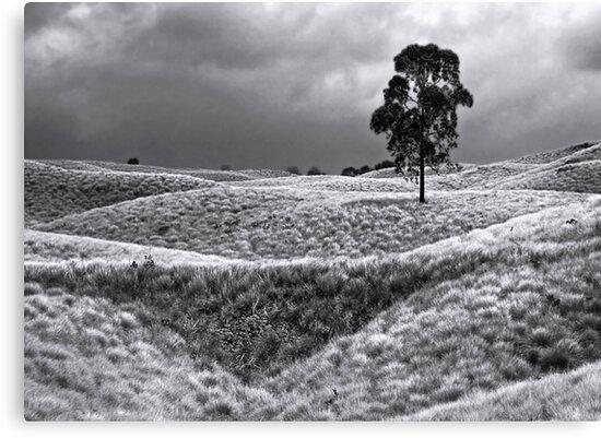Field of Saddle Road Dreams 2 by Ellen Cotton