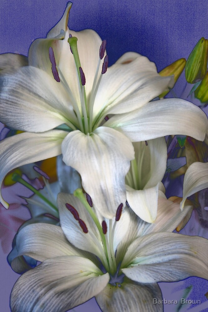 Lily Style by Barbara  Brown