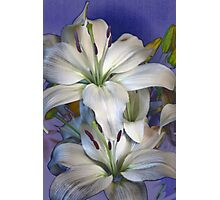 Lily Style Photographic Print