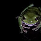 """""""Smiling"""" Green Tree Frog by Sandra Chung"""