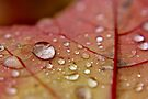 Beautiful Beads of Autumn Rain by Kathleen Daley