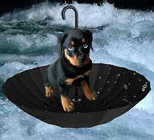 UM..HOW HIGHS THE WATER MAMA ?? ROTHWEILER PUPPY IN UMBRELLA ON WATER > PICTURE AND OR CARD by ✿✿ Bonita ✿✿ ђєℓℓσ