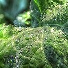 Morning Dew  by Rich Fletcher
