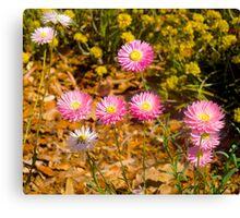 Wildflowers, Kings Park, Perth, Western Australia.. Canvas Print