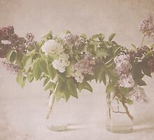 Lilacs #1 by Tracy Edgar