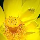 Yellow Lotus Detail by Roger Passman