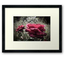 Rose #12 Framed Print