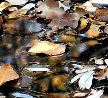 Leaves on the Water by Chris Gudger