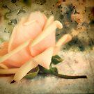 Rose pink by KarenEaton