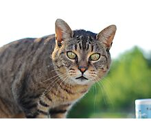 Green Eyed Tabby Cat Photographic Print