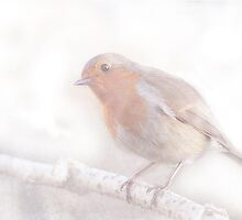 Stay, little cheerful Robin! by Sarah Vernon