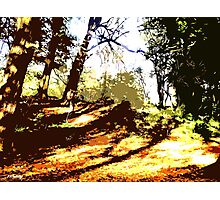 CARPET OF AUTUMN LEAVES Photographic Print