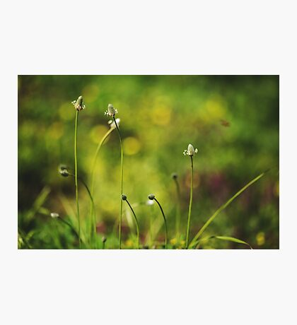 Small white wild flowers Photographic Print