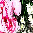 PINK AND WHITE FLOWERS by pjmurphy