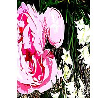PINK AND WHITE FLOWERS Photographic Print