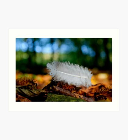 Feather in the Forest Art Print