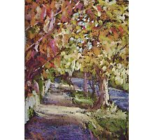 Autumn colours, Leura Photographic Print