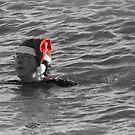 Christmas Day Dip by wiggyofipswich