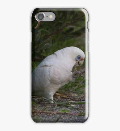 The Joy Of Seedpods  iPhone Case/Skin