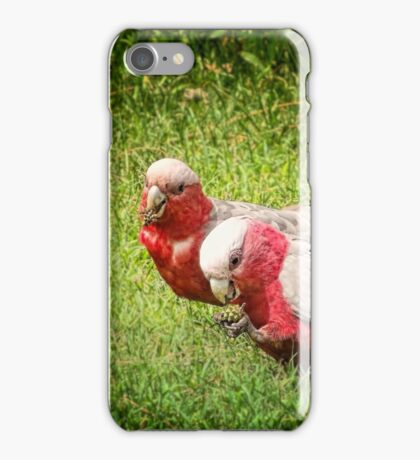 Gilaa (Galah) iPhone Case/Skin