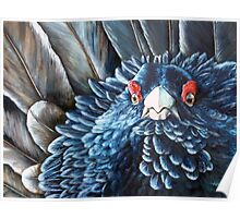 Scottish Capercaillie Original Acrylic Painting by Jane Green Poster