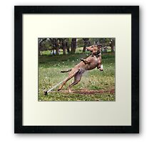 Dogs with game face on .4 Framed Print