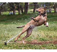 Dogs with game face on .4 Photographic Print