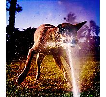 Riot at the dog park Photographic Print
