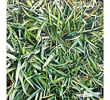 It's Just Grass, Man! Original Acrylic Painting by Jane Green Photographic Print