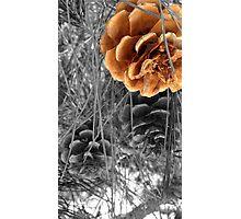 Nature splash Photographic Print