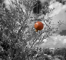 Pomegranate by ppantelas