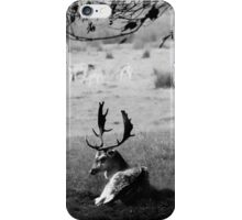Resting Stag iPhone Case/Skin