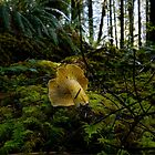 Yellow Chanterelle Mushroom by Charles & Patricia   Harkins ~ Picture Oregon