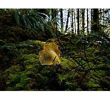 Yellow Chanterelle Mushroom Photographic Print