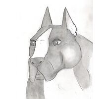 American Staffordshire Terrier Sketch Photographic Print