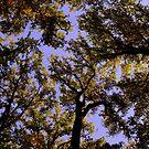 Trees Conversing by Deborah Crew-Johnson
