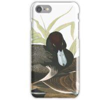 Lesser Scaup - John James Audubon iPhone Case/Skin