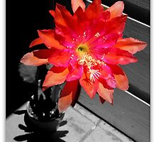 Cactus Flower At High Noon by Michael May