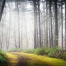 Mysterious Path by Svetlana Sewell