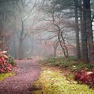 Hazy Path by Svetlana Sewell