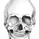 Pointillism Skull by Elise  Coates