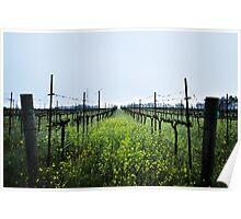 Lush Vineyards Poster