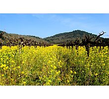 Mustard the Other Wine Photographic Print