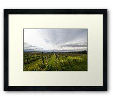 Napa Valley Vineyards Framed Print