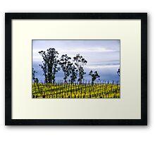 Lush Vineyards Framed Print