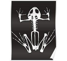 Frog Skeleton Poster