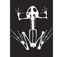 Frog Skeleton Photographic Print