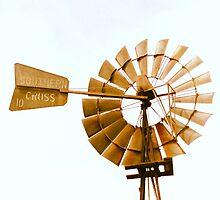 Southern Cross by STEPHANIE STENGEL | STELONATURE PHOTOGRAHY