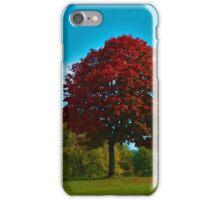 Scarlet tree iPhone Case/Skin