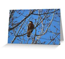 Praise The Lord,  finally, Red-Tailed Hawk Happy New Year's Everyone! 12-30-2016 Greeting Card